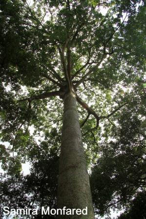 جادوی سبز اوگاندا