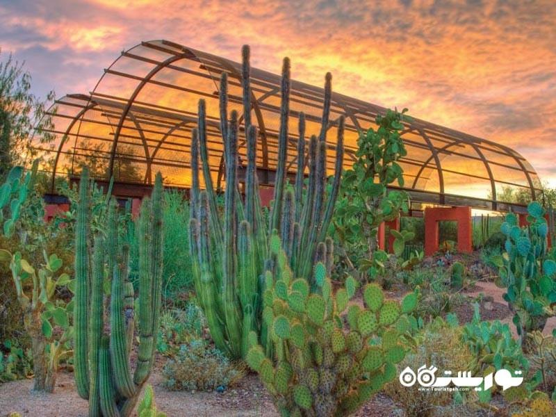 باغ های گیاه شناسی کویری (Desert Botanical Gardens)