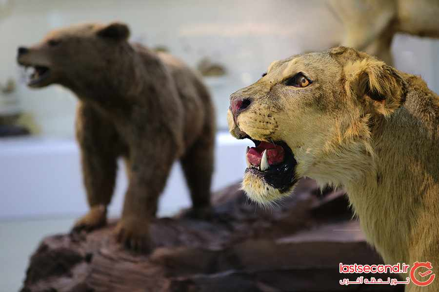 معرفی پارک علمی پروفسور بازیما در مشهد + تصاویر      