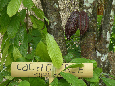 باغ قهوه و کاکائو