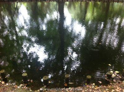 Tier Garten (2)