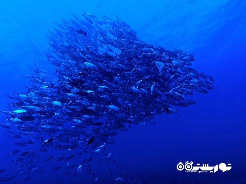 جزیره عظیم مرجانی و حلقه ای شکل رانیورا