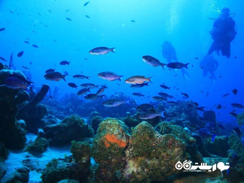 بهترین برای غواصان: جزیره کوراسائو (Curacao)