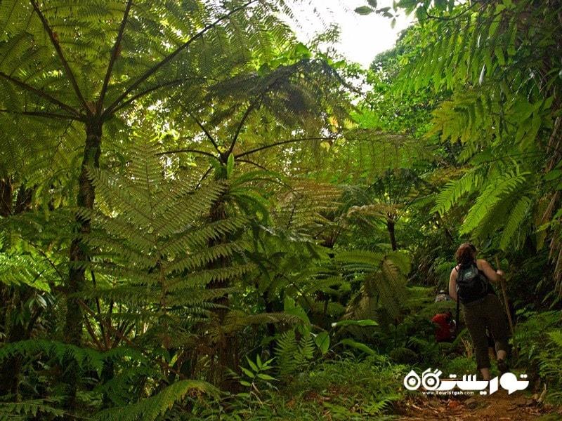 بهترین برای افراد که بیرون از خانه را ترجیح می دهند: جزیره دومینیکا (Dominica)