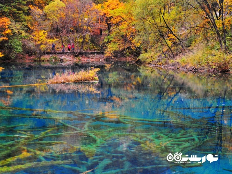 دریاچه فایو فِلاوِر، چین (Five-Flower Lake, China)