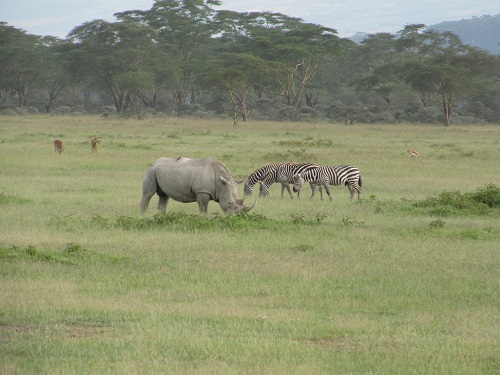 IMG 4156 - سفر به آفریقا - کنیا - قسمت دوم