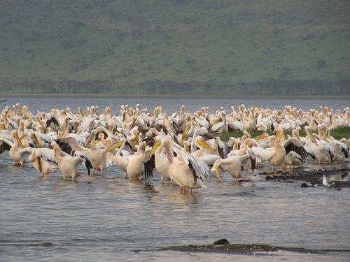IMG 4158 - سفر به آفریقا - کنیا - قسمت دوم