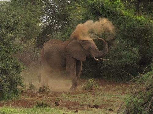IMG 4232 - سفر به آفریقا - کنیا - قسمت دوم