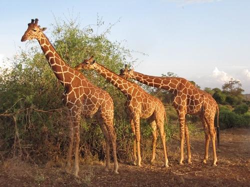 IMG 4240 - سفر به آفریقا - کنیا - قسمت دوم