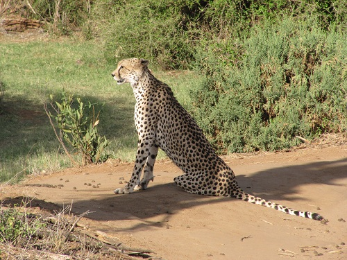 IMG 4286 - سفر به آفریقا - کنیا - قسمت دوم