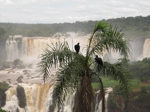 IMG 7223 - سفر به آمریکای جنوبی - برزیل - آبشار ایگواسو (Foz do Iguaco)