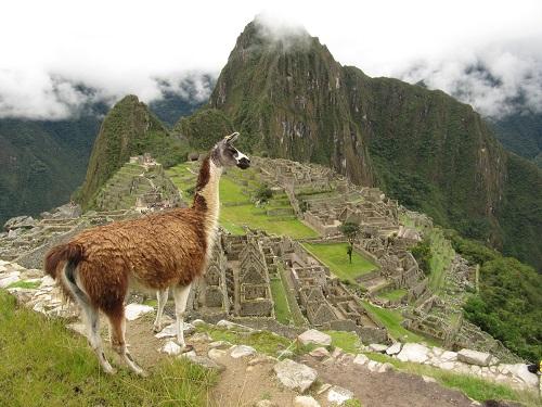 IMG 7739 1 - سفر به آمریکای جنوبی - پرو - ماچو پیچو (Machu Picchu)