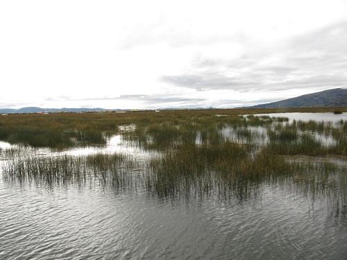 IMG 7753 - سفر به آمریکای جنوبی - پرو - دریاچه تیتیکاکا Titicaca