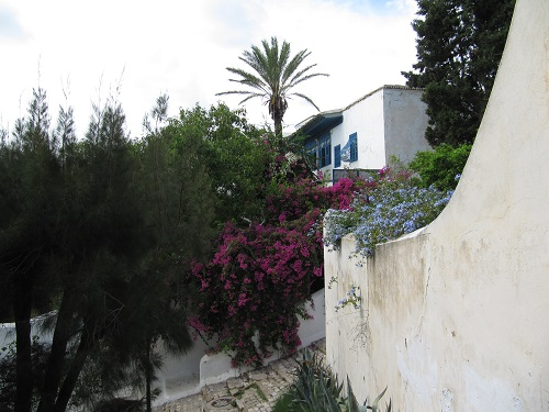 IMG 8425 - سفر به تونس - حومه تونس - قسمت دوم: سیدی بو سعید