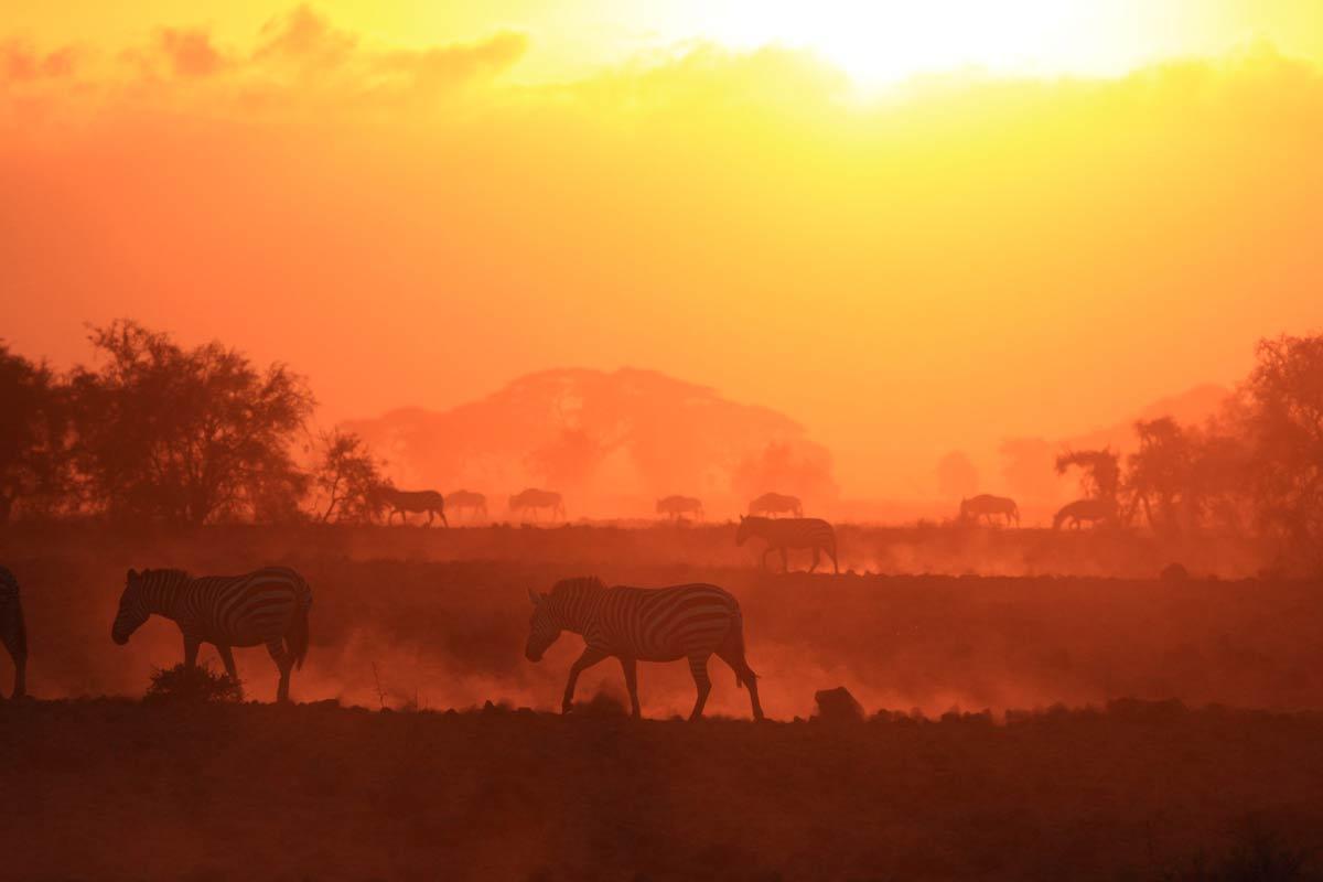 zebra-in-sunrise