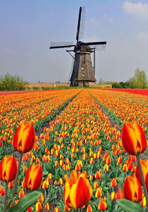 کوکنهف هلند