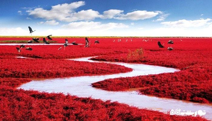 ساحل قرمز در کرانه رود لیائو ، کشور چین