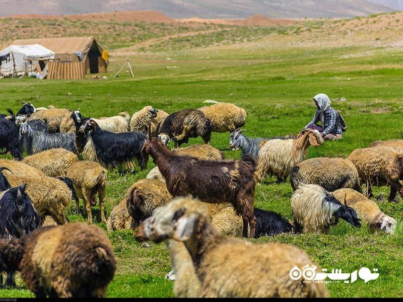 یک روز زندگی با عشایر قشقایی در استان فارس