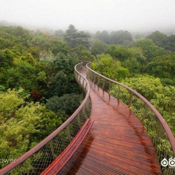 بلومزلَنگ یک راهرو در بالای درختان آفریقای جنوبی
