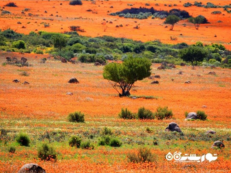 سفر به ناحیه نَمِکَلاند (Namaqualand)
