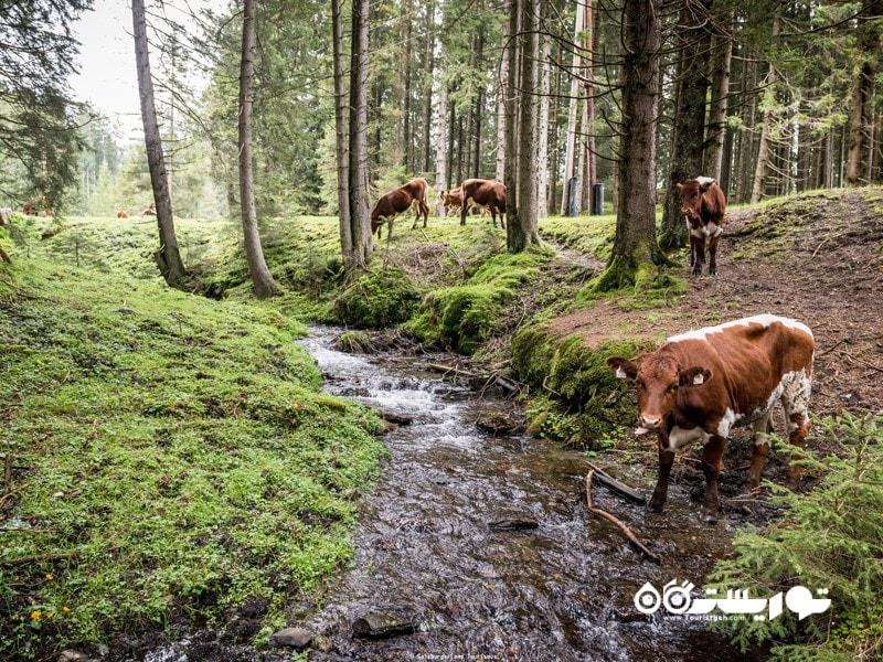 3- پارک ملی هوهه تاوان (Hohe Tauern National Park)، اتریش