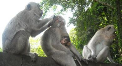 جنگل میمون ها