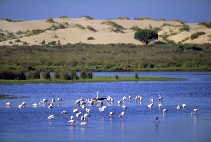 donana national park spain 1 - ۱۱ دلیل برای سفر به آندالوسیا