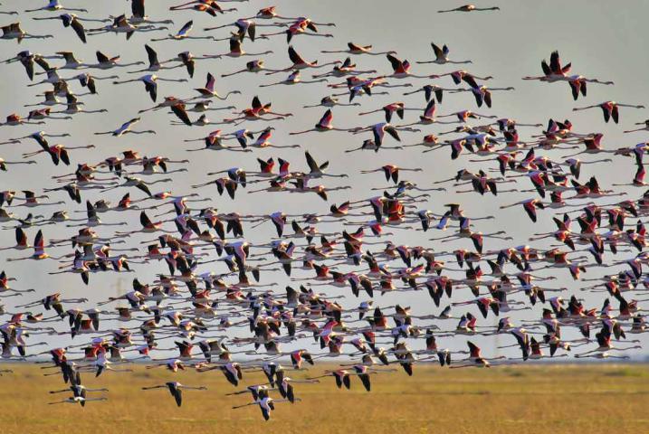 migratory birds in Doñana National Park 3 - سفرنامه آندالوسیا