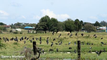 پارک حفاظت شده ناکورو