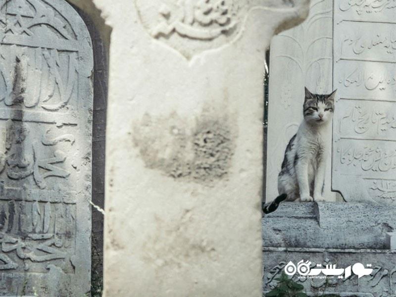 یک گربه در شهر استانبول