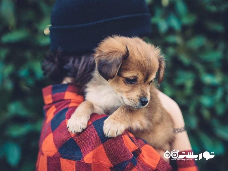 حدود 3 درصد از افراد دنیا در این روز به حیوانات خانگی شان هدیه می دهند