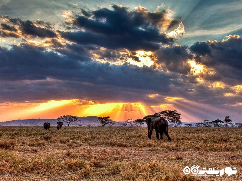 پارک ملی سِرنگِتی، تانزانیا