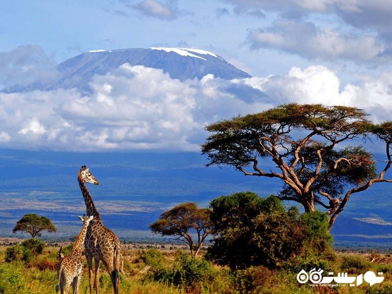 کوه کلیمانجارو، تانزانیا