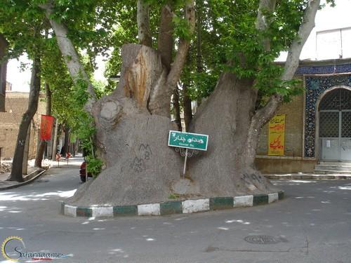 چنار ۱۱۵۰ ساله شهر محلات واقع در میدان چنار شهر محلات