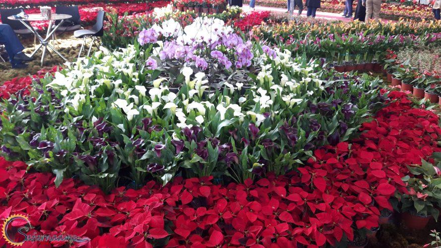 نمایشگاه بین المللی گل و گیاه تهران در سایت سفرنامه