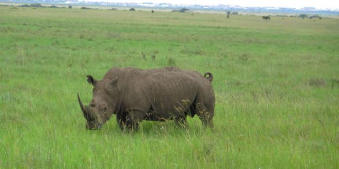 سفرنامه کنیا